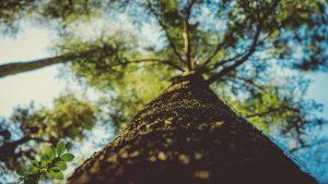 Massivholzmöbel sind positiv fürs Raumklima